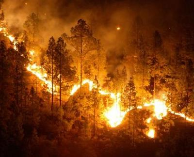 20090724181203-incendio-bosque.jpg